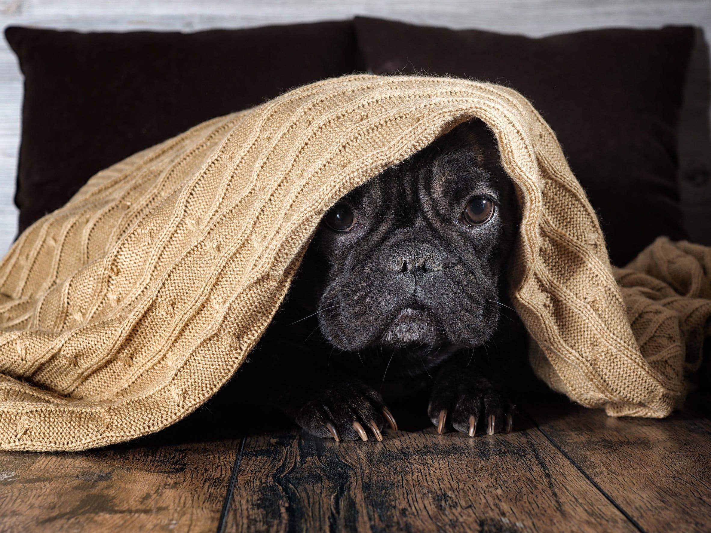5bdea0f598daf Jak najbardziej i nawet nie zdajemy sobie z tego sprawy! Psy często  tolerują jednak takie ludzkie zachowanie, bo są lojalne. Jednak jakie ...