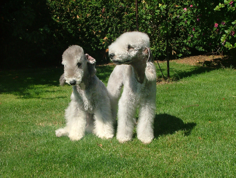 Najdziwniejsze Psy świata Niezwykłe Rasy Zwierzosfera