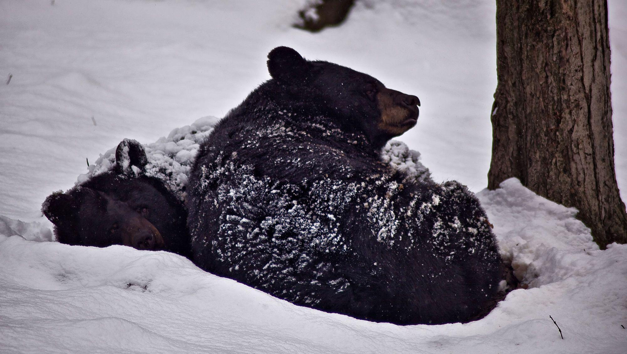 Jakie Zwierzaki Zasypiają Na Zimę Sen Zimowy Czy Hibernacja