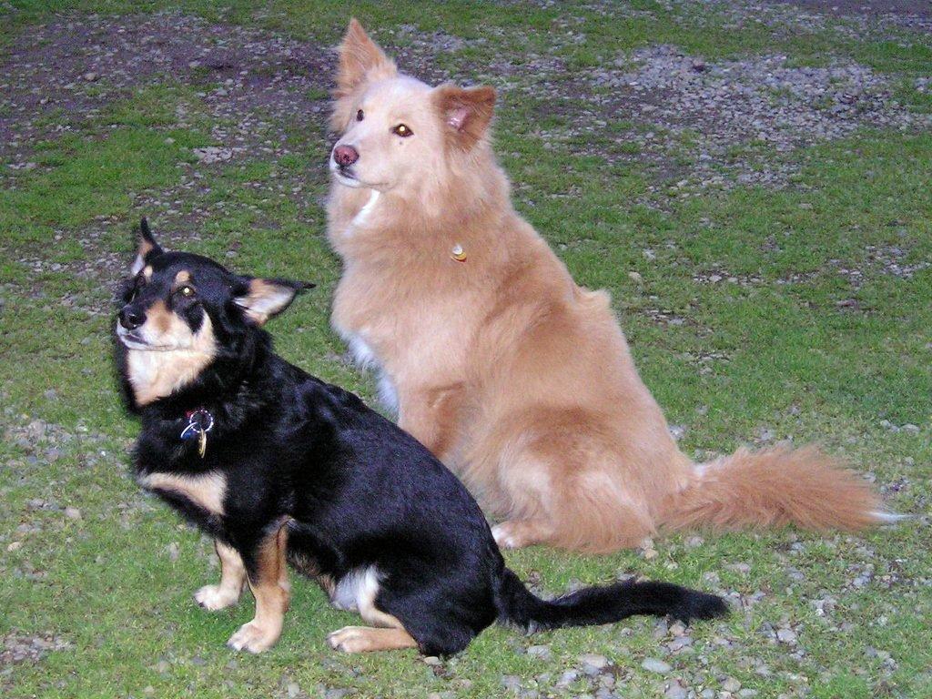 W superbly 10 najzdrowszych ras psów na świecie - Zwierzosfera PL18