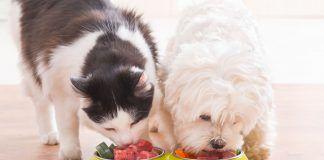 pies i kot razem jedzą