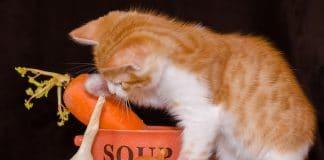 Kot i warzywa