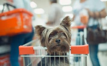 pies na zakupach